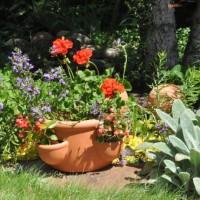 garden015