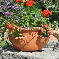 garden016